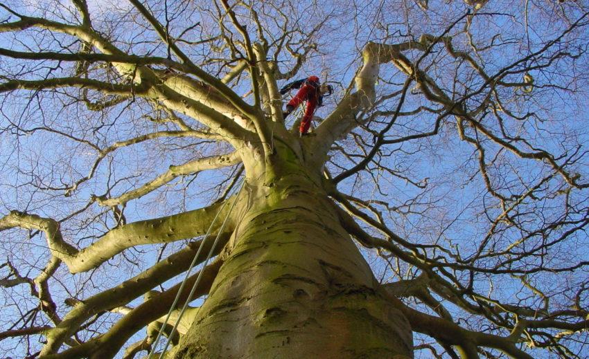 Bomenwacht in actie