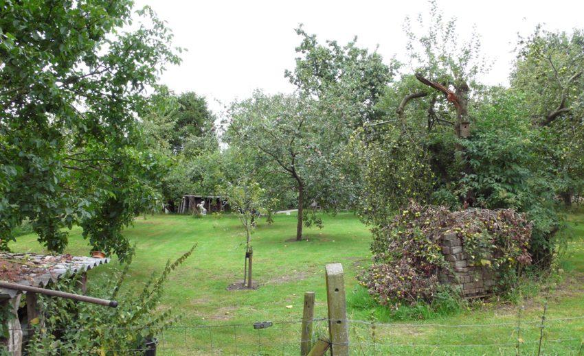 Drentse boomgaard